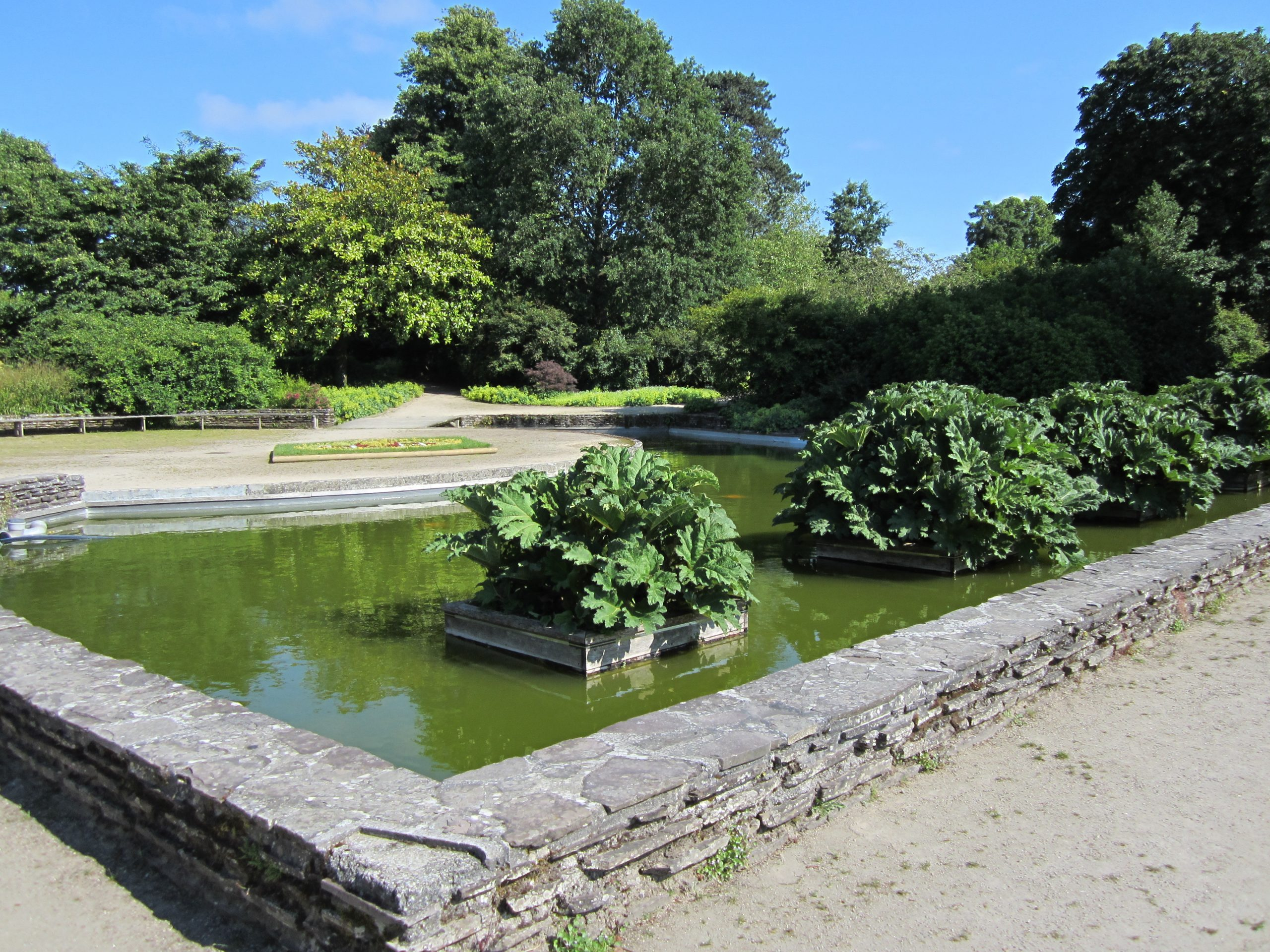 File:jardin Des Plantes D'avranches - Bassin Des Gunneras ... dedans Jardin Des Plantes Avranches