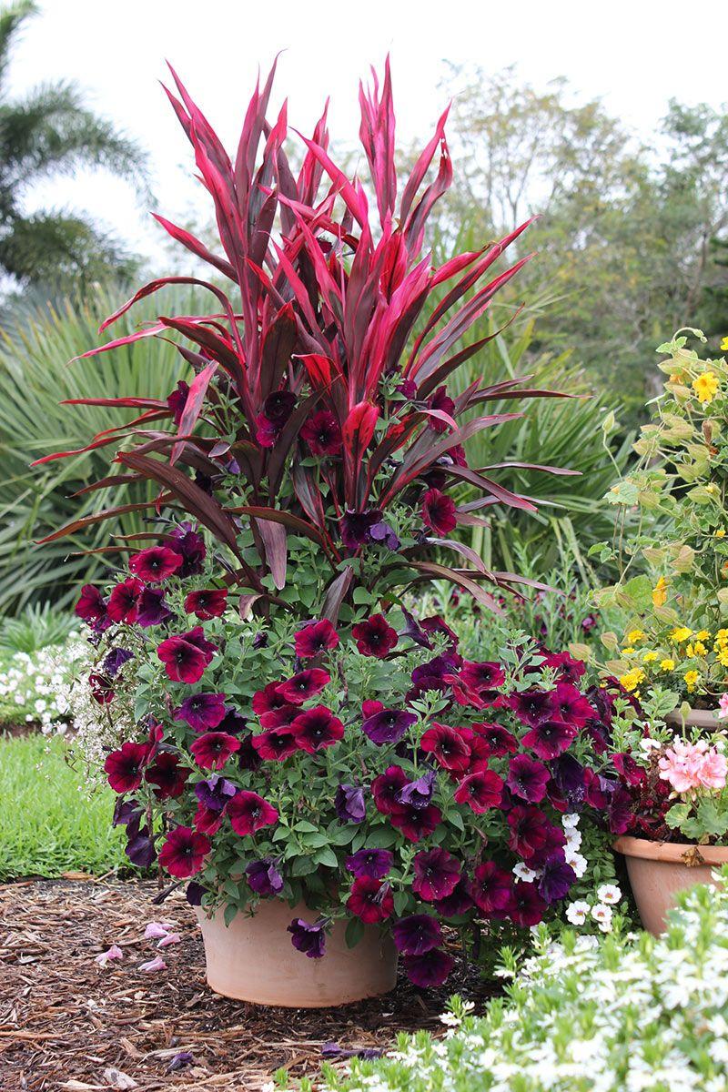 Fleurs Rouge Sombre | Jardin Anglais | Jardins, Pot Jardin ... pour Pot Rouge Jardin