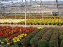 "Grand Est - Nicolas Schmelz, Horticulteur : ""jardiland Et ... dedans ""jardiland"" -""horaires"" -""narolles"""