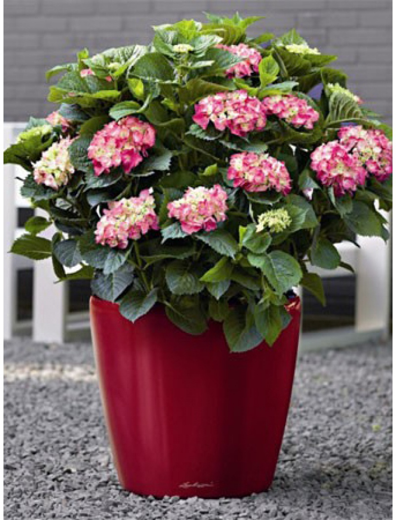 Grand Pot Classico Premium Rouge Brillant encequiconcerne Pot Rouge Jardin