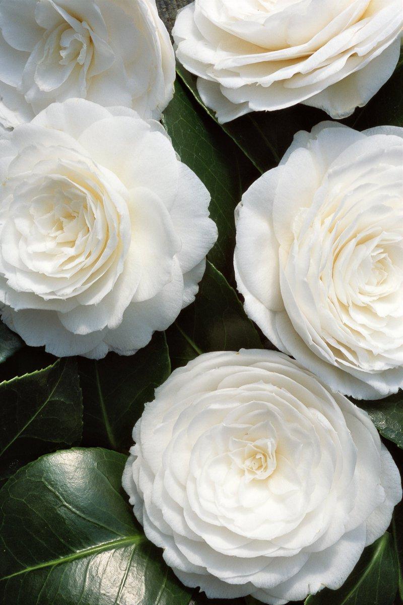 Installe À Nouveau Ses Champs Fleurs Aux Tuileries À ... tout Jardin Occasion
