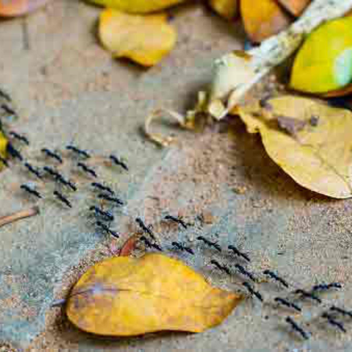 Jardin : 10 Anti-Fourmis Naturels Et Efficaces : Femme ... encequiconcerne Anti Fourmi Pas Cher