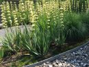 Jardin Gris Bordure De Pelouse 20 M Jardinage Jardinage ... à Bordure Jardin