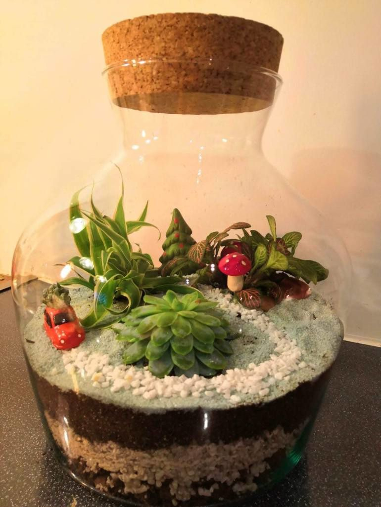 Misterbricolo Réalise Son Mini Jardin D'intérieur ... concernant Mini Jardin Interieur