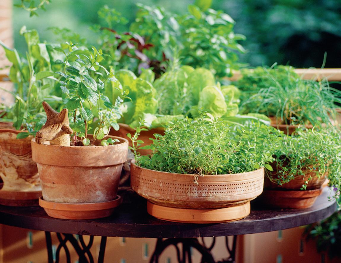 Na | Un Jardin Sur Mon Balcon pour Un Jardin Sur Mon Balcon