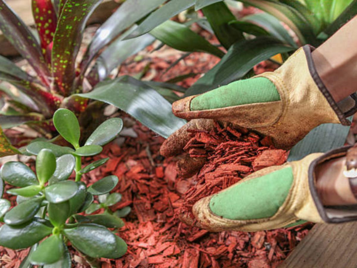 Pailler Le Jardin : Quand, Comment Et Avec Quel Paillis ? destiné Copeaux Jardin