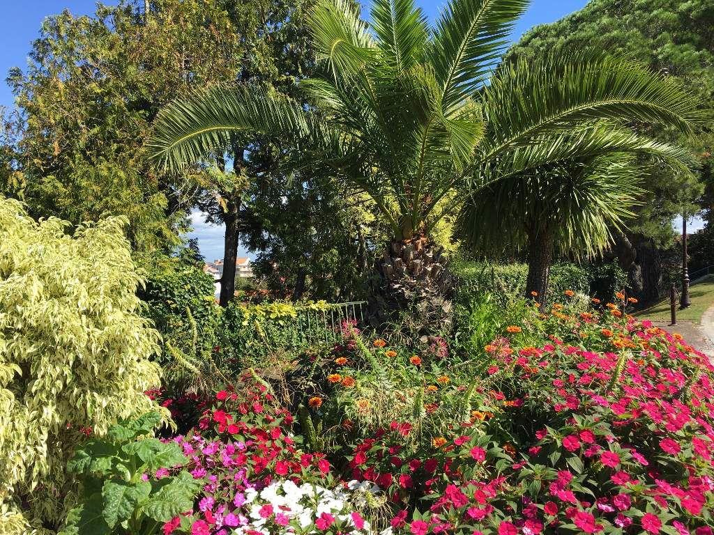 Palmiers Du Parc Mauresque Arcachon - La France De Poupie pour Jardin Mauresque Arcachon