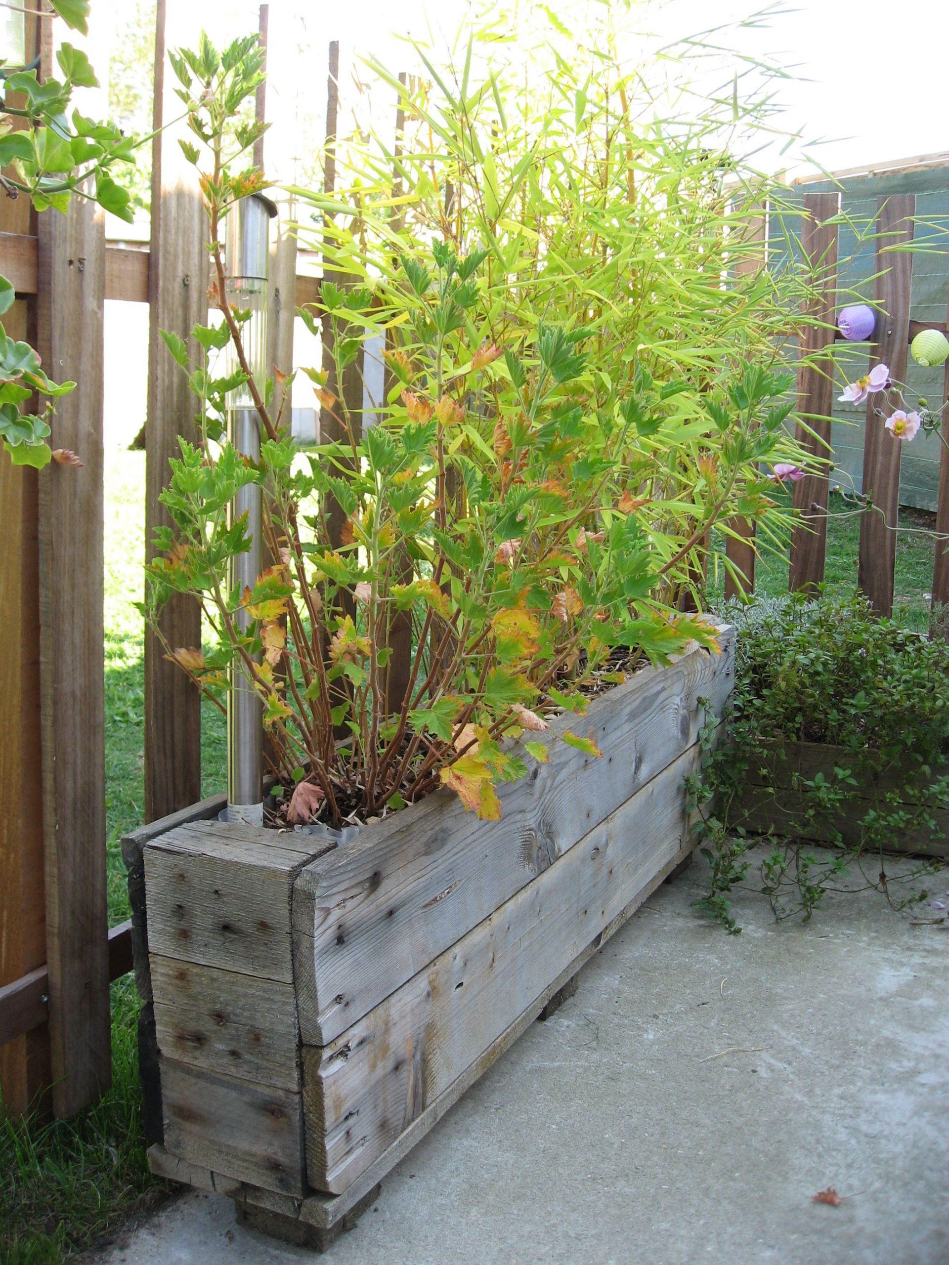 Pot De Fleur, Ici Pour Les Bambous | #jardin #garden #diy ... à Deco Jardin Bambou